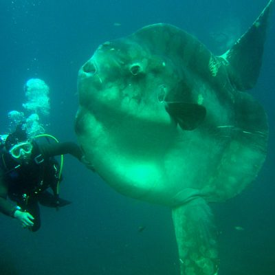 Record-breaking two-tonne fish is the heaviest of its kind