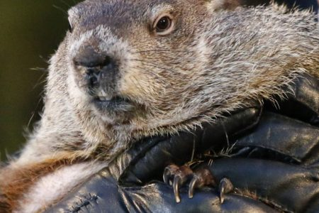 Groundhog Day: Phil isn't the only fuzzy forecaster