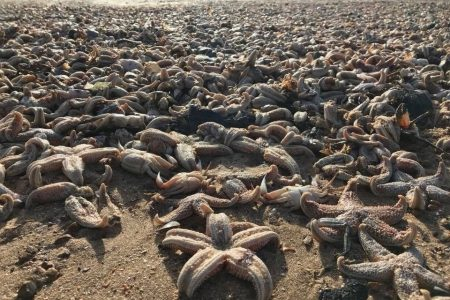 Tens of thousands of dead sea creatures wash up on British beach