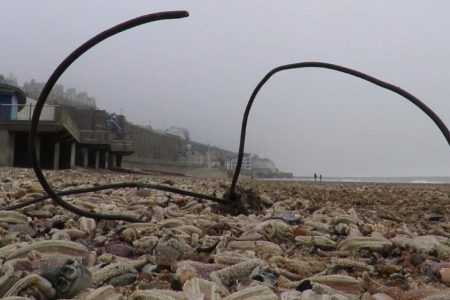 Thousands of dead starfish wash up on UK beaches