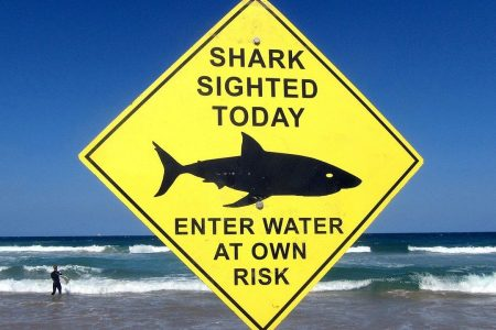 Shark attacks force World Surf League to cancel major competition in Australia