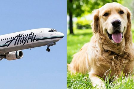 Alaska Airlines tightens emotional support animal policy
