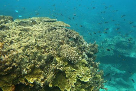 Australia to invest millions in Great Barrier Reef restoration and protection