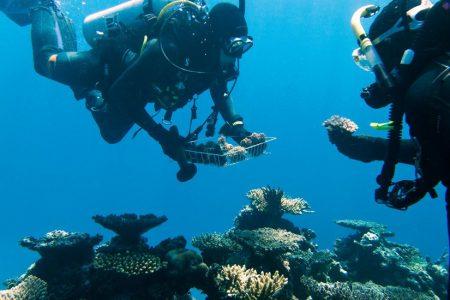 Australia Pledges Millions of Dollars in Bid to Rescue Great Barrier Reef