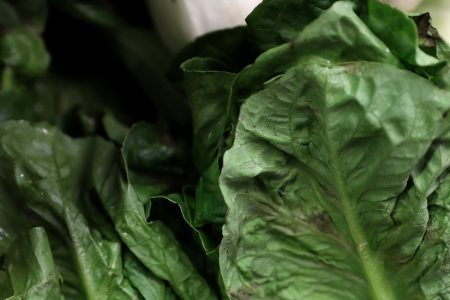 E. Coli Flare-Up Is Largest Multistate Outbreak Since 2006