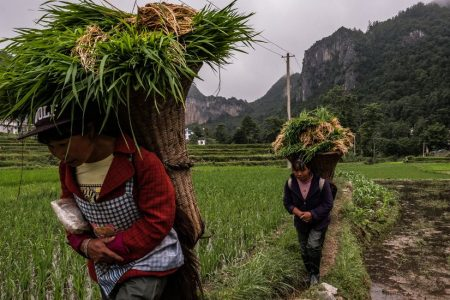 How More Carbon Dioxide Can Make Food Less Nutritious
