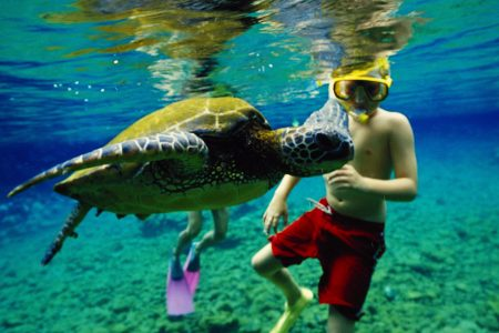 Hawaii May Be The First State To Ban Reef-Killing Sunscreens