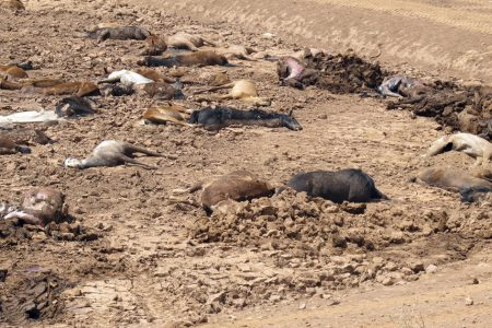 Nearly 200 horses found dead amid Southwest drought in Arizona