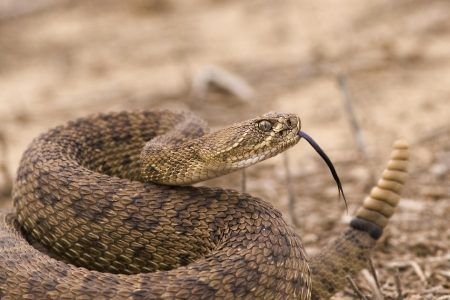 Kayaker hospitalized after rattlesnake falls from a tree and bites him
