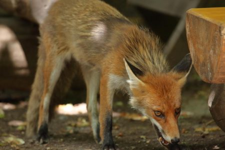 New rabies test could revolutionize treatment, spare some the shots
