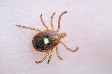 Lone Star tick bites triggering red meat allergies in more people across US, physician says