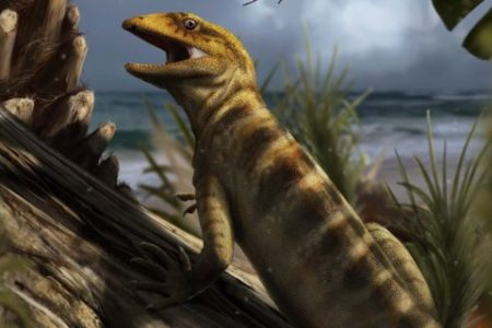 Scientists found the world's oldest lizard fossil — and it suggests lizards lived among the earliest dinosaurs