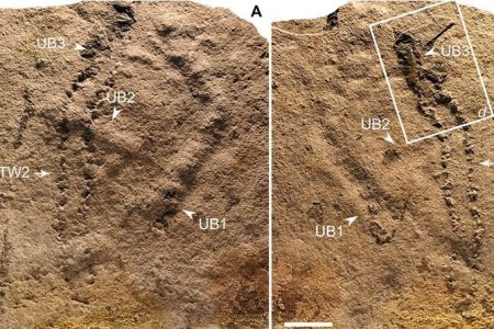 These 550-Million-Year-Old Footprints Could Be The Oldest Ever Discovered