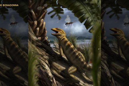 240 million-year-old 'mother of all lizards' found