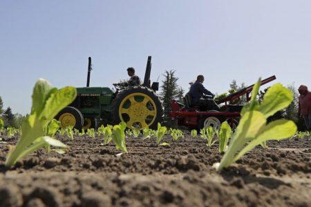 Five dead, nearly 200 sick in E. coli outbreak from lettuce. And investigators are stumped.