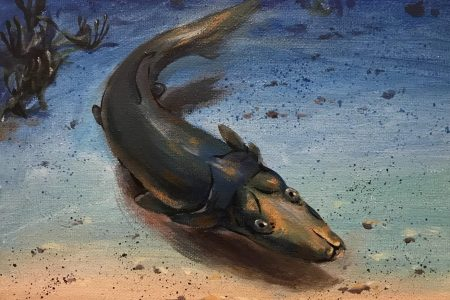 Remarkable Fossil of Strange Platypus-like Armored Fish Discovered
