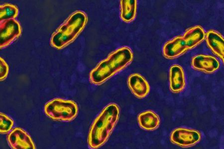Child in Idaho recovering from the plague, the state's second case since 1990: Officials