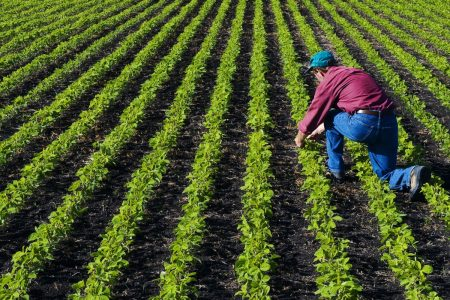 North Dakota soybean farmers fear Canada will take market share after canceled Chinese contracts