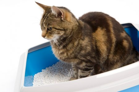 How a parasite from cat poop can reduce your fear and maybe make you an entrepreneur