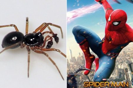 Spiders can use electricity to fly through the air like a real-life 'Spiderman'