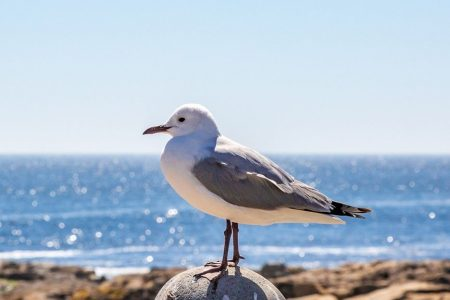 Dozens of drunk seagulls found on beaches in Southern England