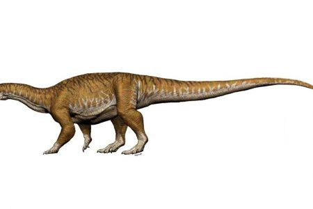 33-foot-long dinosaur, bigger than King Kong, unearthed in Argentina