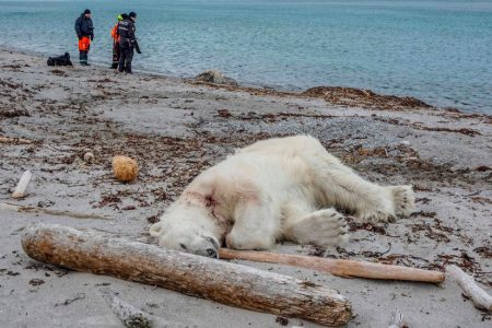 Polar Bear Shot and Killed After Attacking Cruise Ship Guard