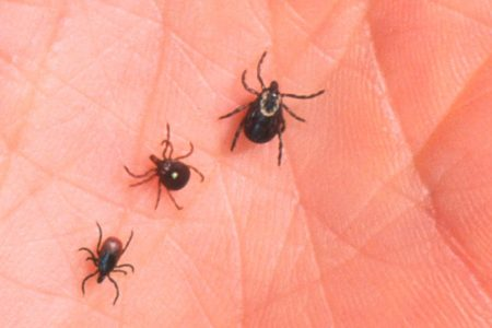 Diseases spread by ticks are on the rise — here's what you are at risk for throughout the US