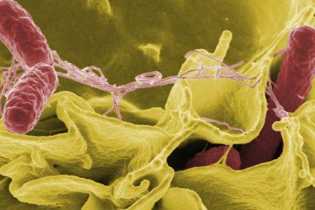 Walmart, HEB, Food Lion Swiss rolls recalled over salmonella concerns