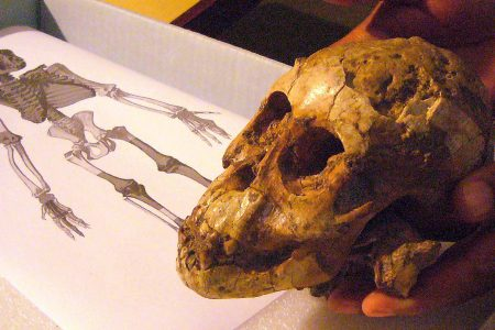 Ape-like toddlers climbed trees 3.3 million years ago, fossil suggests
