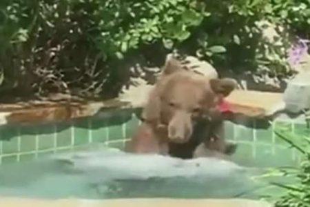 Bear recorded relaxing in hot tub, drinking margarita