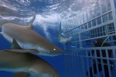 'There's a shark in the cage!' Shaq O'Neal pulled from the water on 'Shark Week'