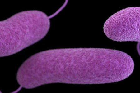 Virginia resident dies after coming into contact with a flesh-eating bacteria