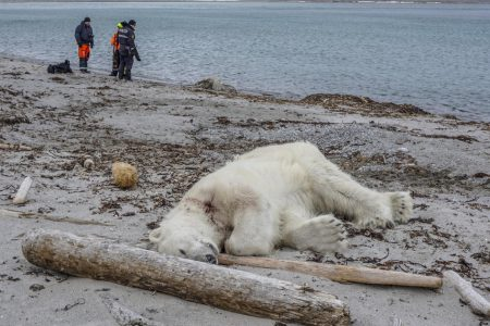 Cruise ship guards' killing of polar bear sparks international outrage