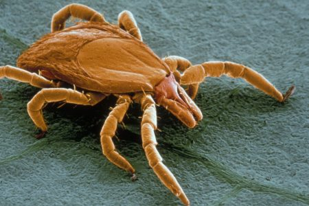 Hope for Lyme disease victims: Researchers race to develop new tests — and a vaccine