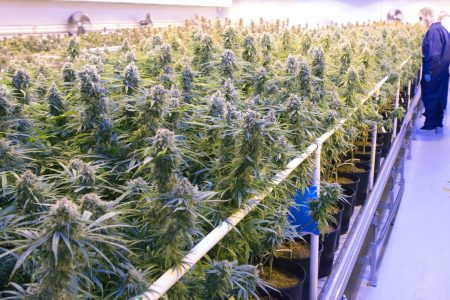 Top cannabis exec: Expect to see more strategic investment coming to cannabis