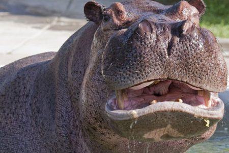 Chinese tourist killed by hippo while taking pictures, fisherman mauled to death nearby