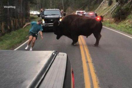 Man goes head-to-head with bison at Yellowstone, prompting new warnings from the National Park