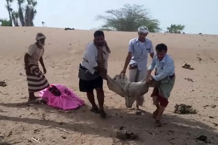 UN Says Saudi-led Airstrike Killed at Least 22 Yemeni Children