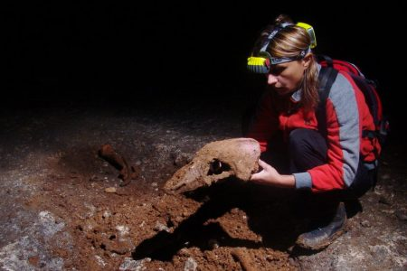 The DNA of Extinct Cave Bears Lives On