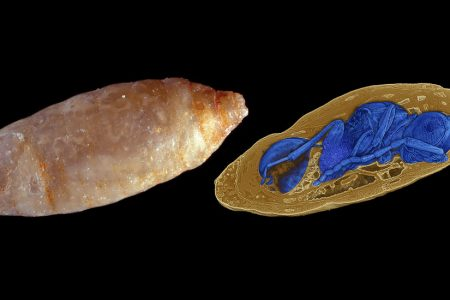 Before These Parasitic Wasps Finished Devouring Live Flies, They Became Fossils