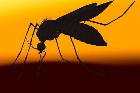 Massachusetts Sees Rise In Number Of Mosquitoes Infected With West Nile