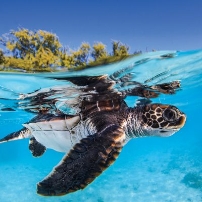 Just one tiny piece of plastic may be enough to kill a baby turtle