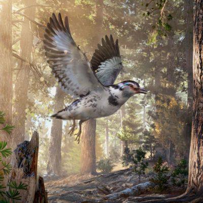 'Messy' New Species of Dinosaur-Era Bird Discovered