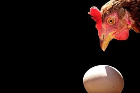 Physicists solve an age-old conundrum: the chicken or the egg