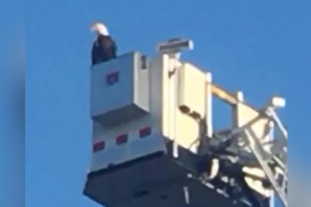 Eagle swoops in and becomes part of firefighters' 9/11 tribute