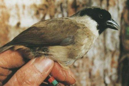 Good Job, Humans: 8 More Bird Species Confirmed Extinct