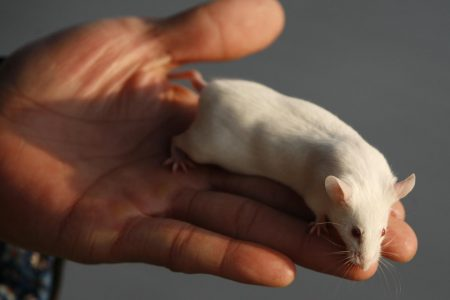 Restaurant Chain Offers to Pay For Woman's Abortion After She Finds Dead Rat in Her Soup