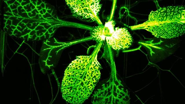Watch a Mutant Plant Burst Into Action When Attacked