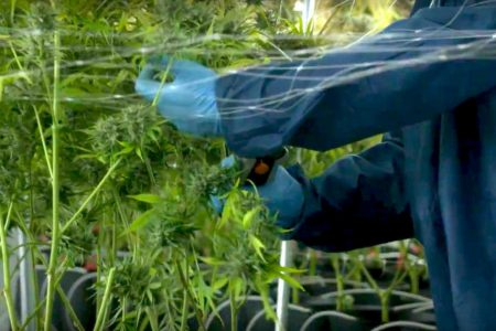 Tilray shows the highs, lows of investing in pot